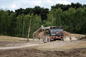 Dolfinarium Harderwijk - Een dagje Dolfinarium in ...