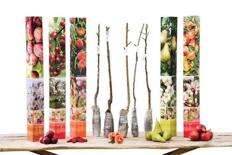 Set van 5 verschillende fruitbomen (90 - 100 cm)