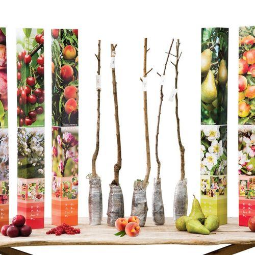Set van 5 verschillende fruitbomen (85 - 100 cm)