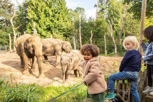 Entdecken Sie den DierenPark Zoo in Amersfoort (2 P.)