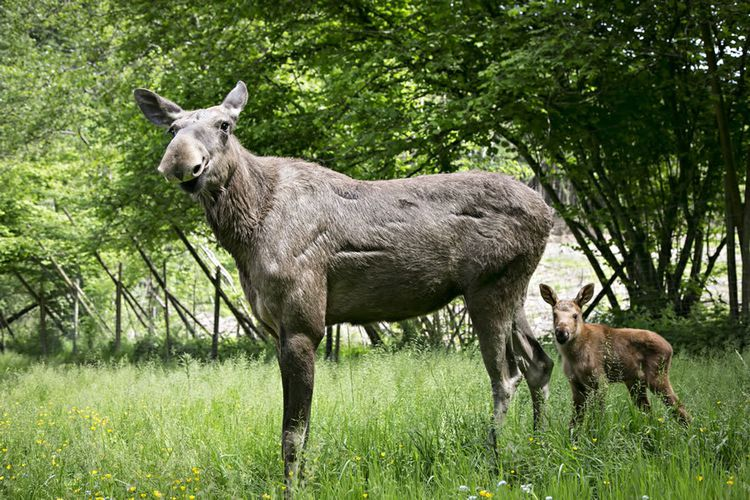 Tickets voor dierenpark Forestia vlakbij Spa (BE) (2 p.)